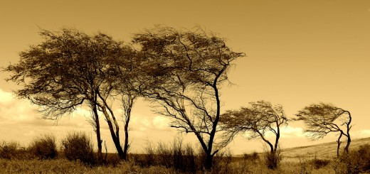 Windblown Trees by John-Morgan, on Flickr. CC Image, Some rights reserved